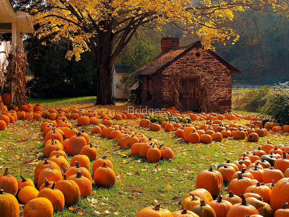 The pumpkin farm by bridges redbubble - Fall wallpaper pumpkins ...