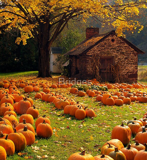 The Pumpkin Farm by Bridges