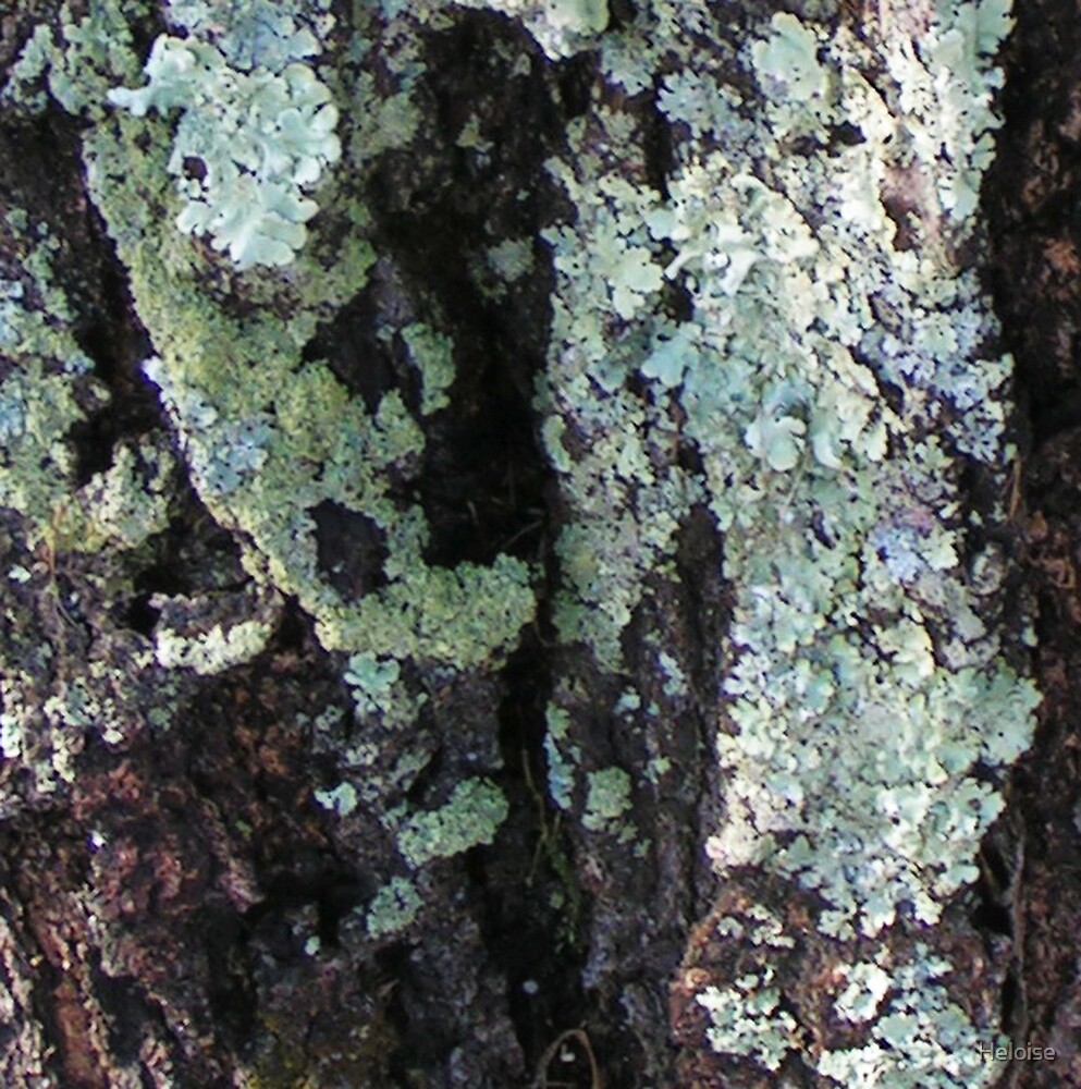 tree fungus by Heloise