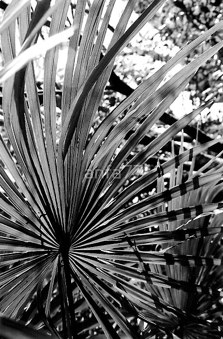 palm by anfa77