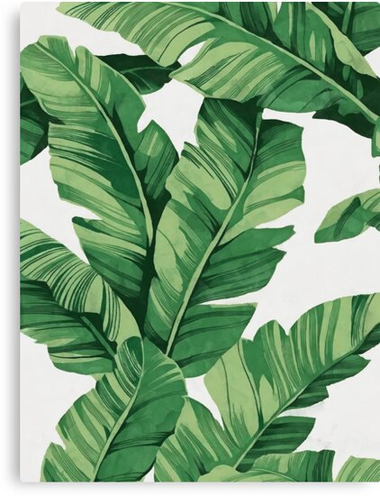 Quot Tropical Banana Leaves Quot Canvas Prints By Catyarte Redbubble