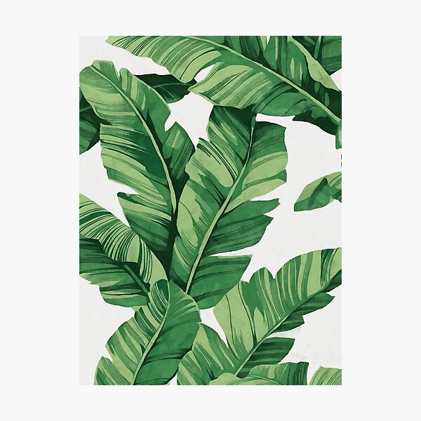 Tropical banana leaves Photographic Print