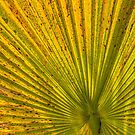 Palm by Thaddeus Zajdowicz