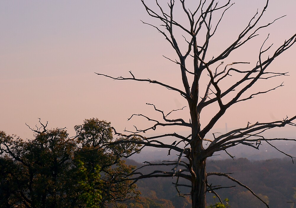 Blasted Tree in Evening Light by kitlew