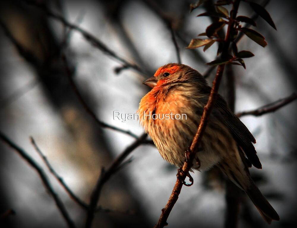 Winter Sunshine by Ryan Houston
