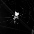 Spider by Jamie Goolsby