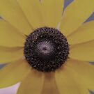 Sunflower by Jamie Goolsby