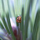 Ladybug by Jamie Goolsby