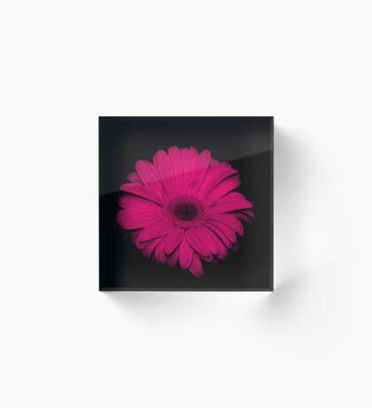 Pink  Gerbera.... on black... Acrylic Block