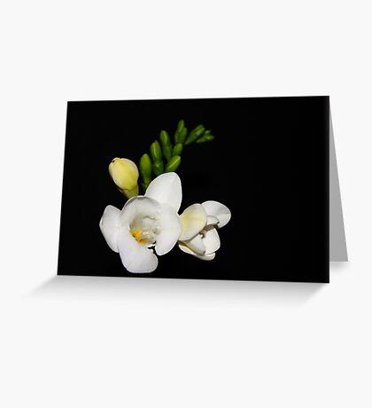 Freesia on Black....#1 Greeting Card