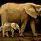 Animals of African Origin