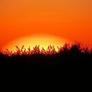 Summer Sun by ahedges
