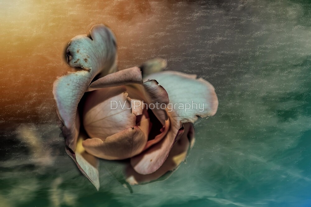 Textured Rosebud by DVJPhotography