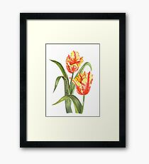 Yellow Parrot Tulips Framed Print