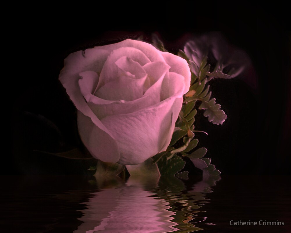 Lil Pink Rose by Catherine Crimmins