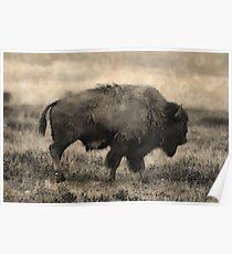 Plains Bison - American Buffalo Poster