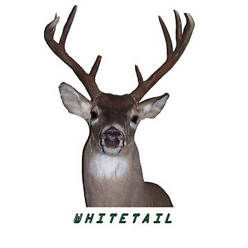 WHITETAIL by webdog