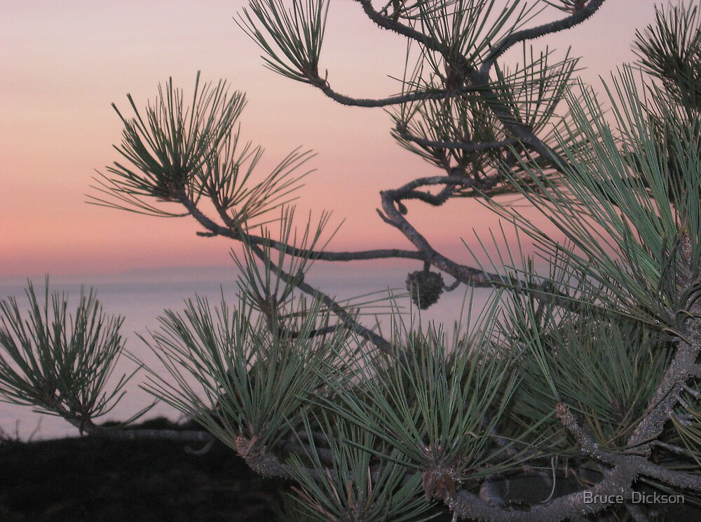 pastels & pines by Bruce  Dickson