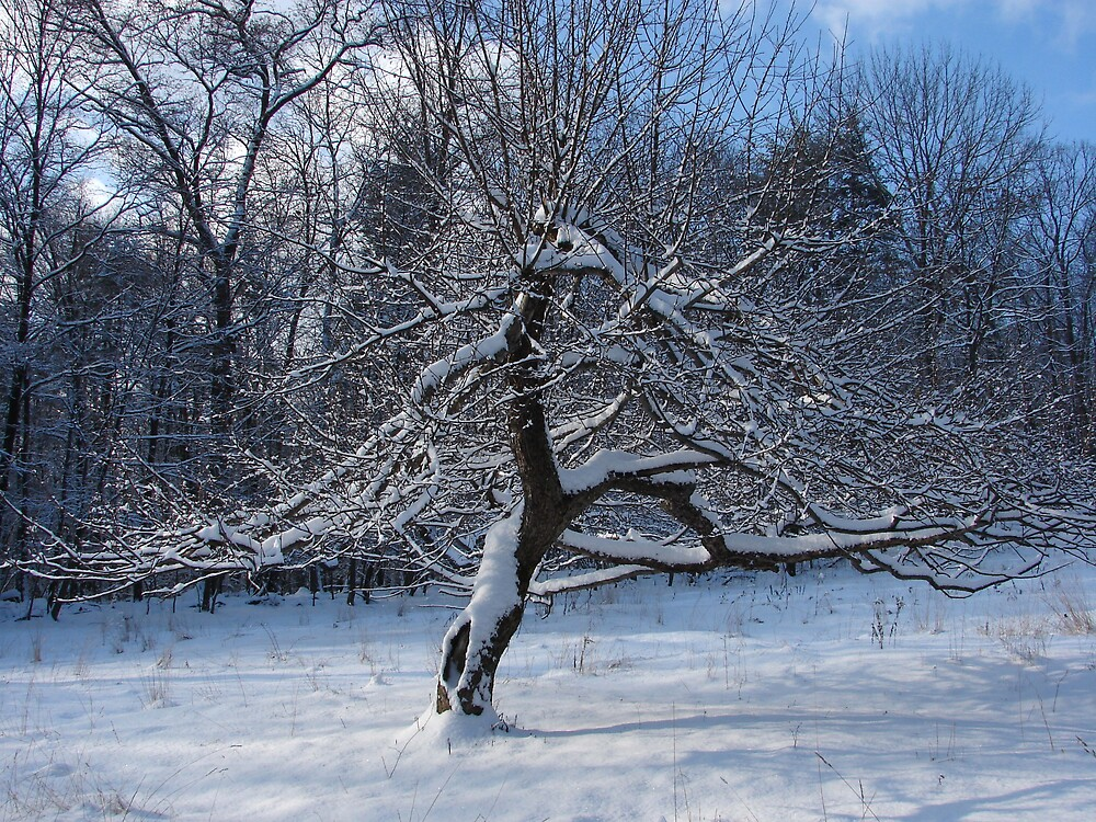 Winter balance by vikinggirl