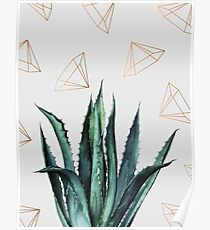 Agave Geometry #redbubble #lifestyle Poster