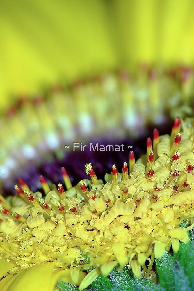 Yellow Mellow by ~ Fir Mamat ~