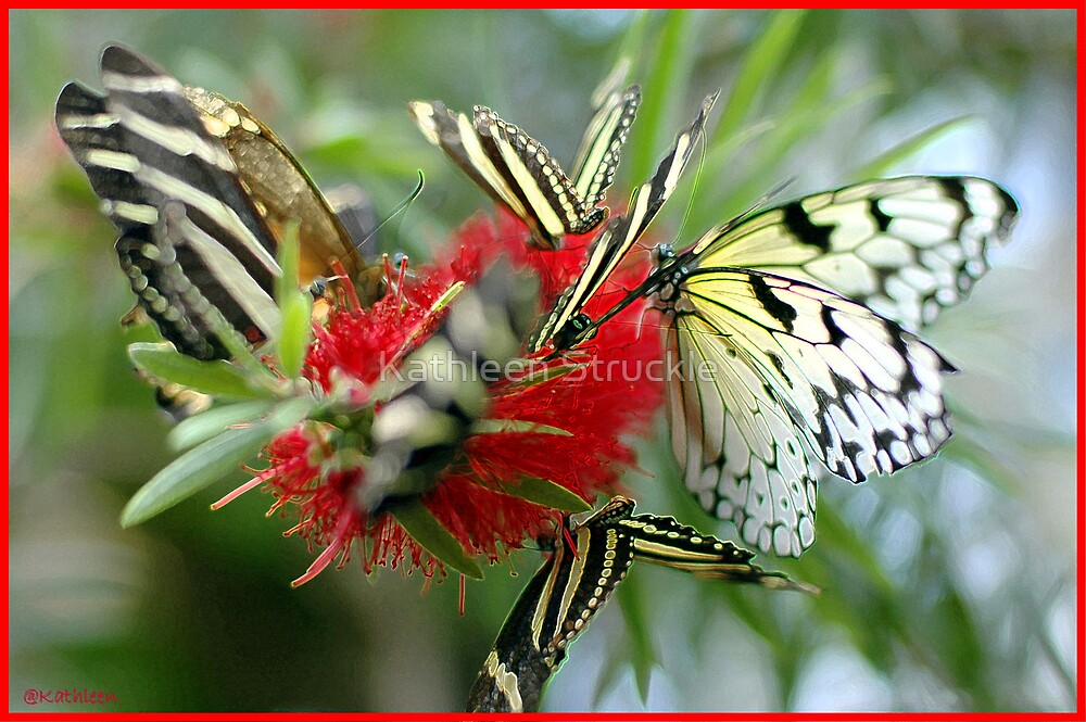 Butterflies On Red by Kathleen Struckle