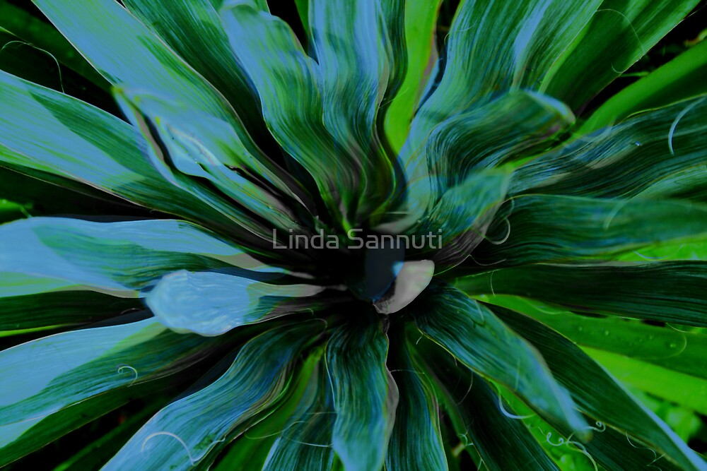 green eye lady by Linda Sannuti