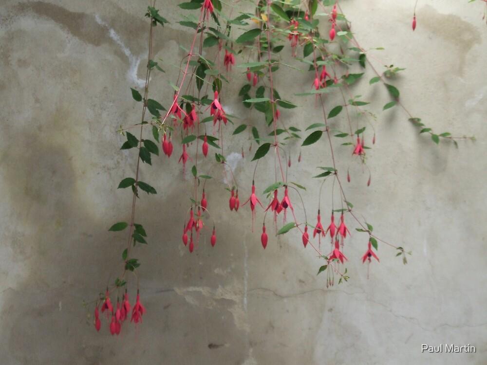 Fuschia on the wall by Paul Martin