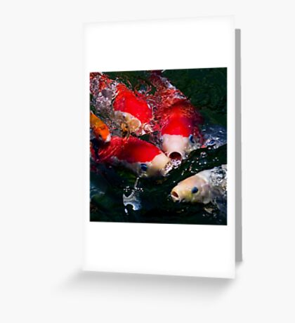 Koi feeding frenzy Greeting Card