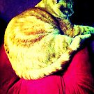 Tabby Cat at Rest by EvePenman