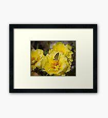 Nectar Framed Print