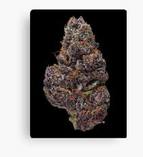 Purple Haze Bud Canvas Print