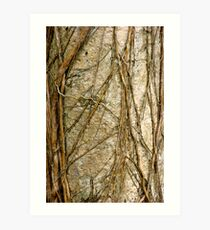 Matted and Plaited Art Print