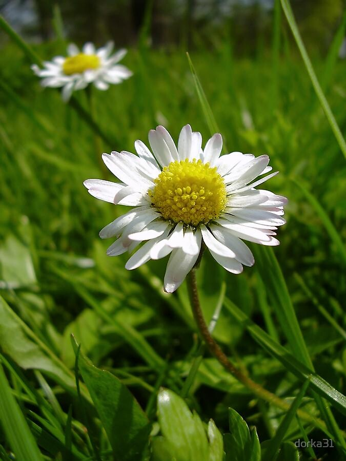 little miss daisy by dorka31