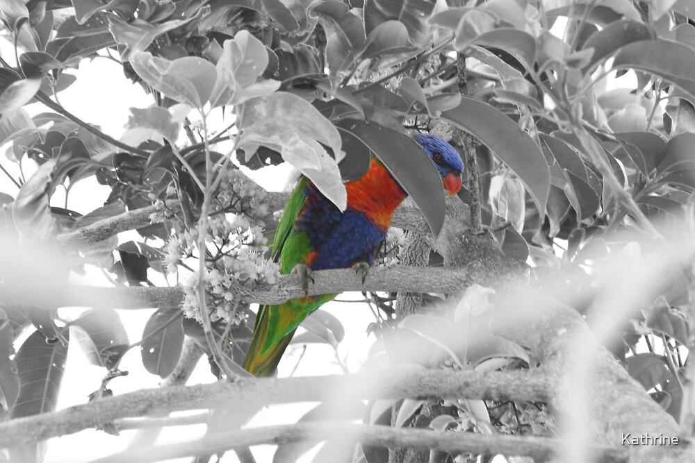 Birds by Kathrine