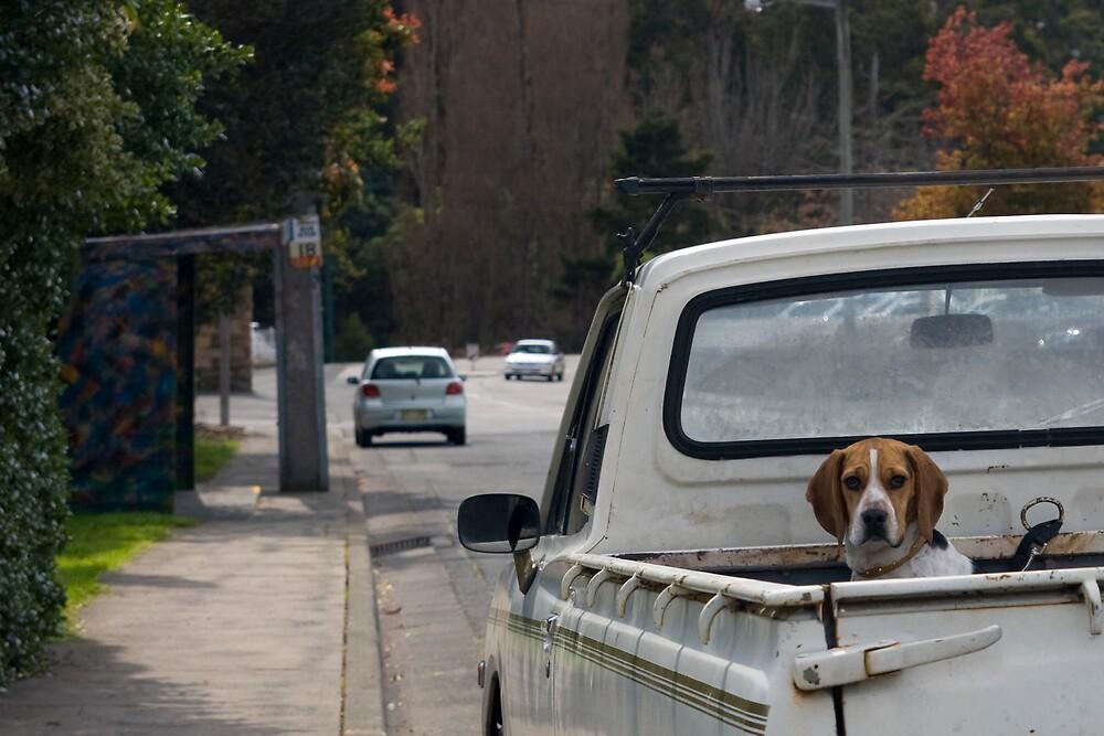 Watch Dog by Chris Putnam