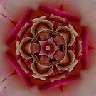 Rose Mandala by Maryanne Lawrence