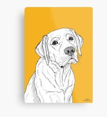 Labrador Dog Portrait Metal Print