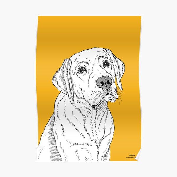 Labrador Dog Portrait Poster