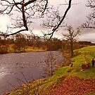 River Tweed, Northumberland by trish725