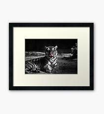 tiger, black and white Framed Print