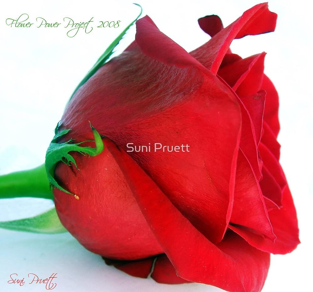 Profile For Flower Power by Suni Pruett