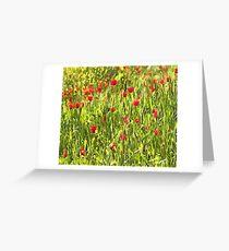 Flanders Poppies Greeting Card