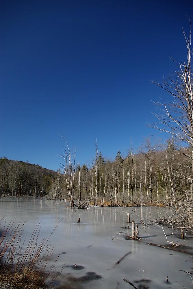Frozen Pond by David Miller