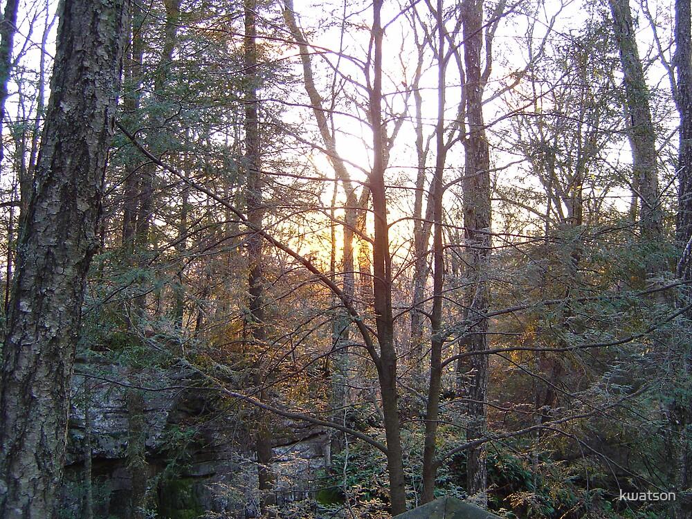 Sunset thru the trees by kwatson