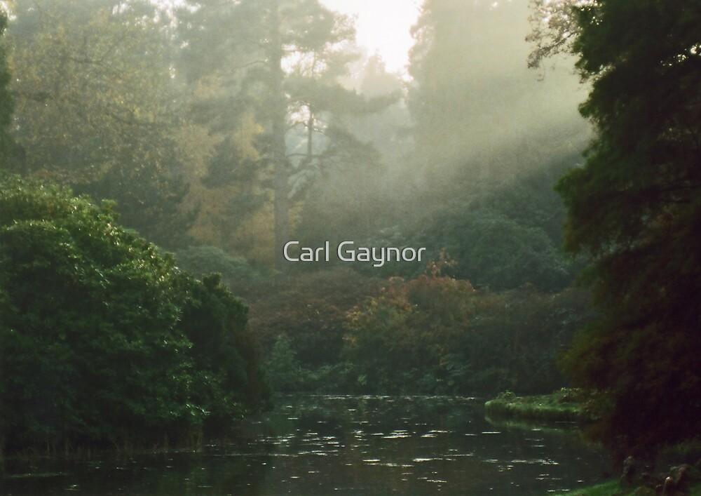 'Winter-Sun Garden'  by Carl Gaynor