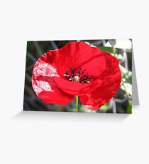 Single Red Poppy Flower  Greeting Card