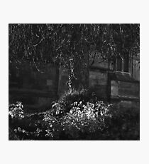 den Photographic Print