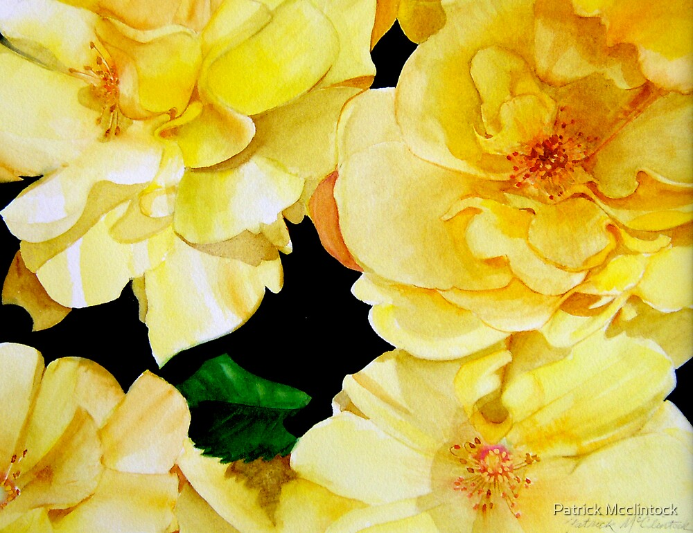 Yellow roses by Patrick Mcclintock