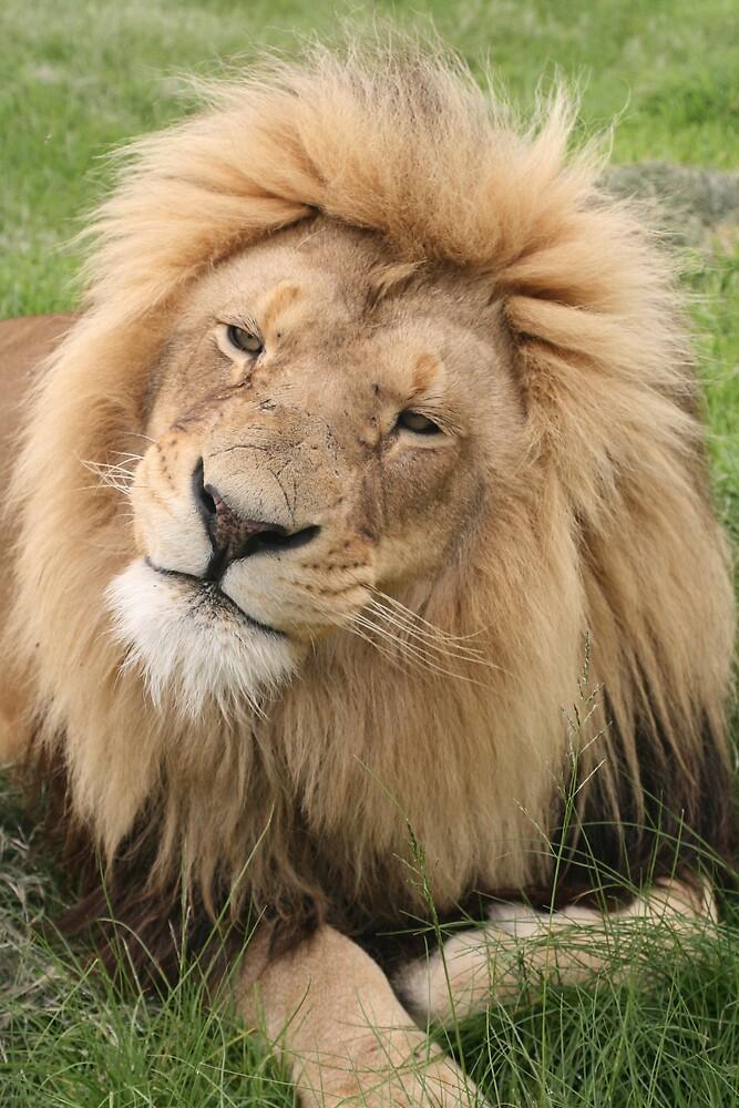 photo of Lion by adewinnaar